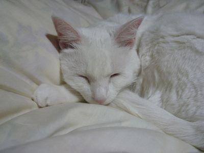 みるくの寝顔