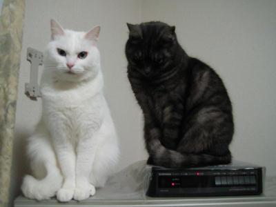 マリー&クロ