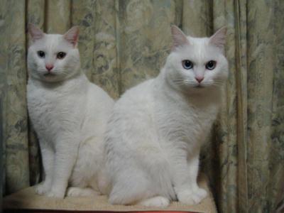 シロ&マリー