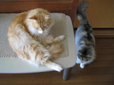 ショコラ&ミケ