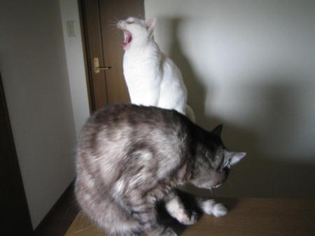 シロ♂&クロ♀