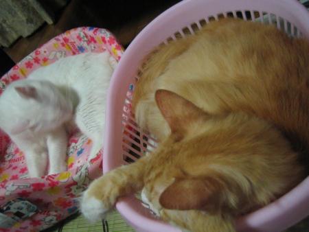 ショコラ♂&マリー♀