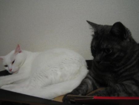 マリー♀&クロ♀