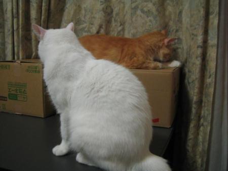 マリー♀&ショコラ♂
