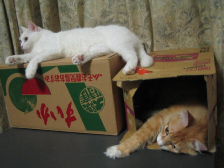 マリー&ショコラ♂