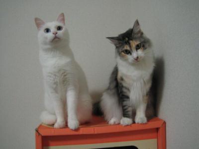 マリー&ミケ