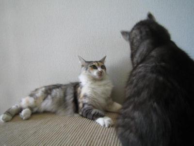 ミケ&クロ