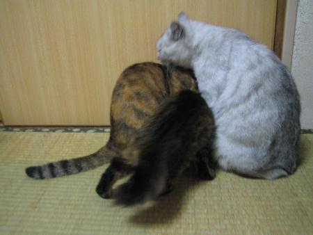 チビ♀&プー♀&シロ♂