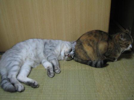 シロ♂&チビ♀