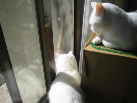 マリー&シロ&子猫
