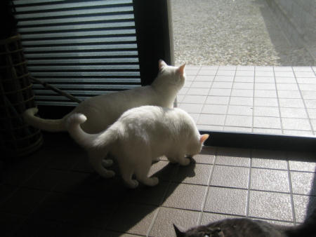 シロ♂&マリー♀&クロ♀