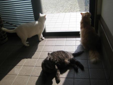 シロ♂&クロ♀&ショコラ♂