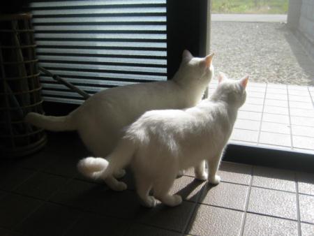 シロオ♂&マリー♀
