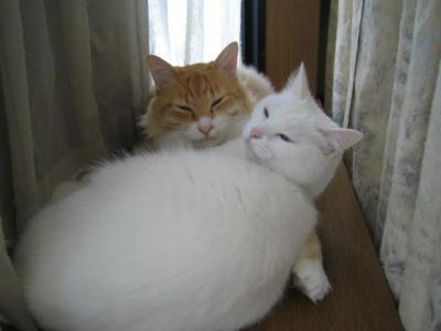 ショコ♂&マリー♀