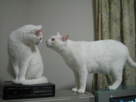 マリー♀&シロ♂