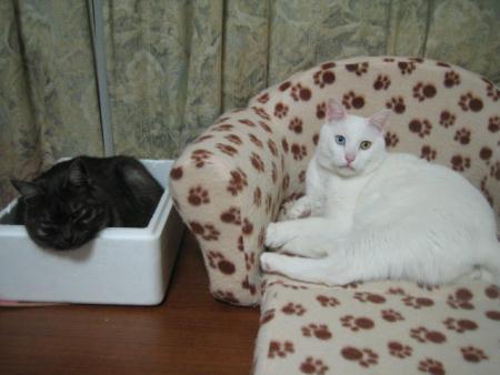 クロ♀&シロ♂