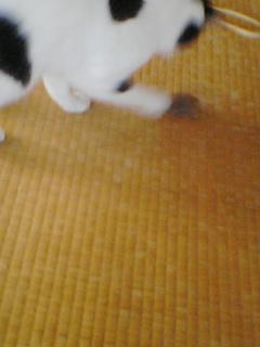 ねずみちゃん1