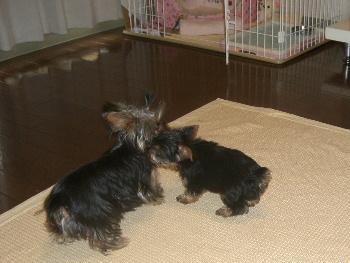 2007年7月みぃ&ティガ