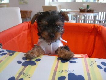 ティガ2ヶ月