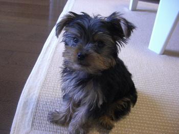ティガ3ヶ月