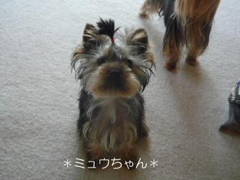 モモちゃん (1)
