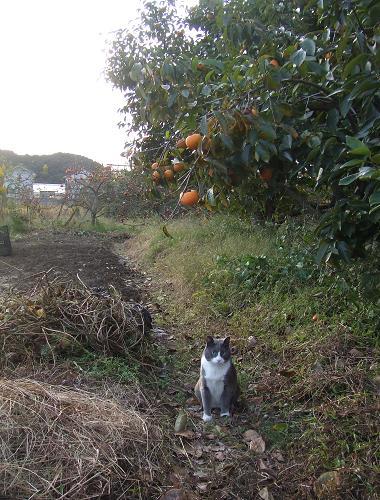 4柿と文ちゃん2008