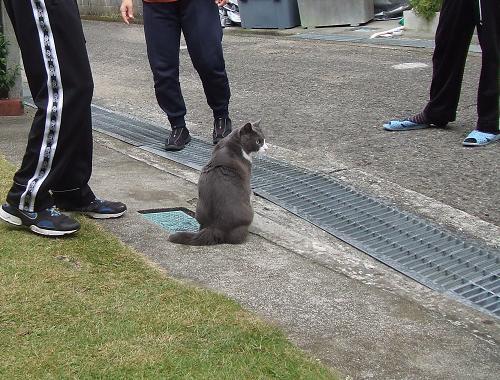 1井戸端猫