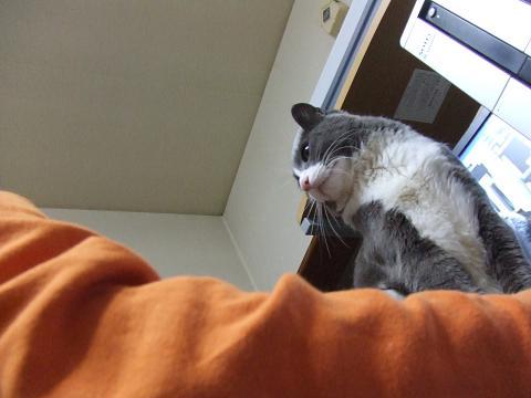 ネット妨害猫