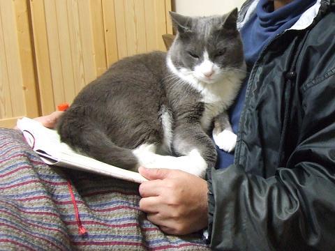 読書妨害猫