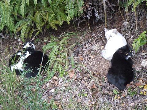 4五台山の猫たち