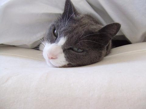 この枕さいこー
