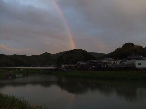 5虹でかいです