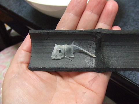 4胸鰭にある魚の形をした骨