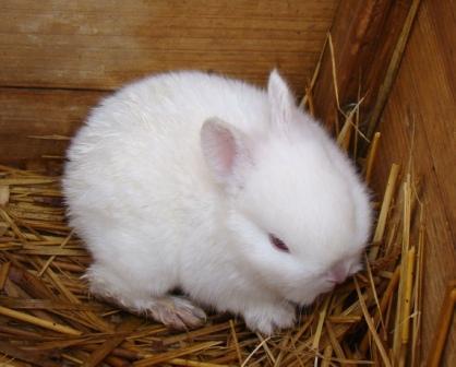 子ウサギ白s