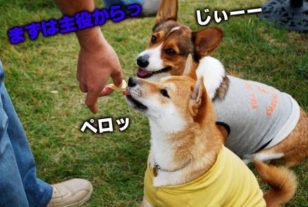 フクちゃん&仁君
