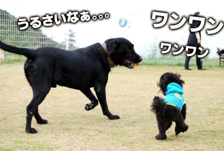 フウくん&towa