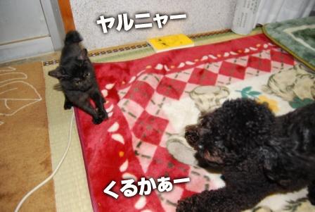 2008_110811080057.jpg