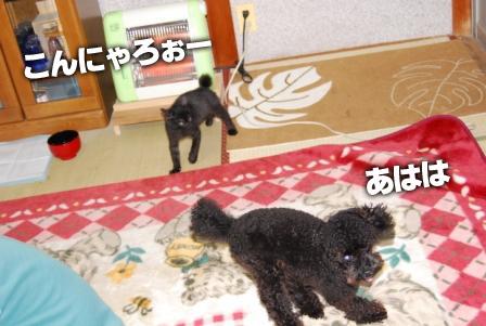 2008_110811080059.jpg