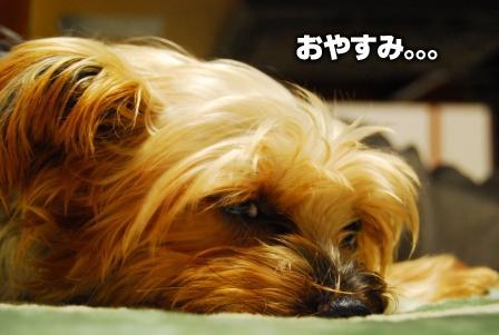 2008_110811080105.jpg