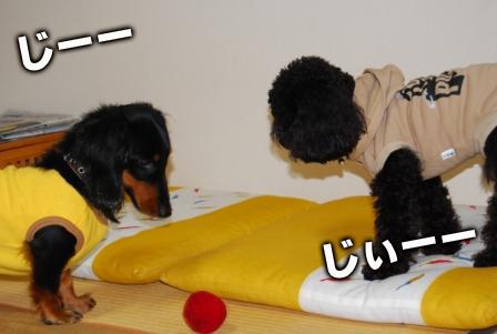 2008_110911090036.jpg