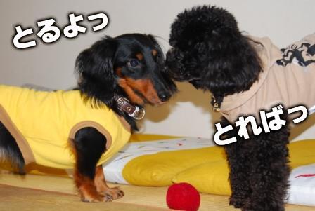2008_110911090037.jpg