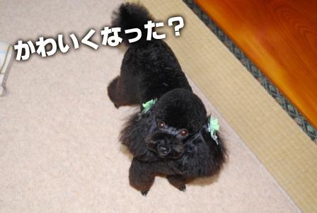 2008_112211220010.jpg