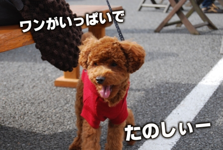 2008_112311230049.jpg