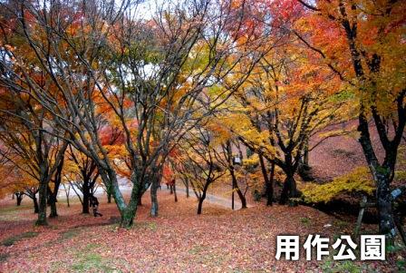 2008_112911290018.jpg