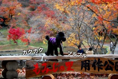 2008_112911290023.jpg