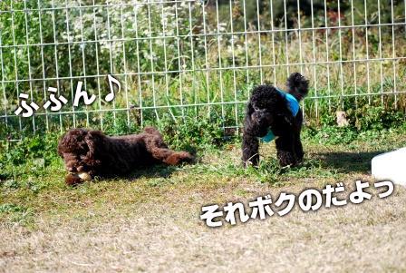 2008_113011300070.jpg