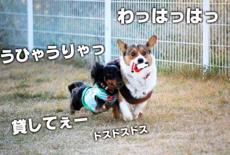 2008_113011300154.jpg
