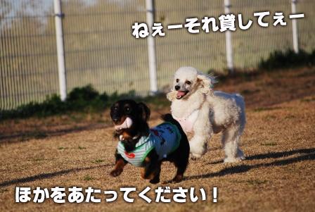 2008_113011300220.jpg
