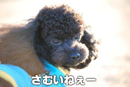 2008_113011300239.jpg