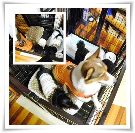cats3_20090810222228.jpg
